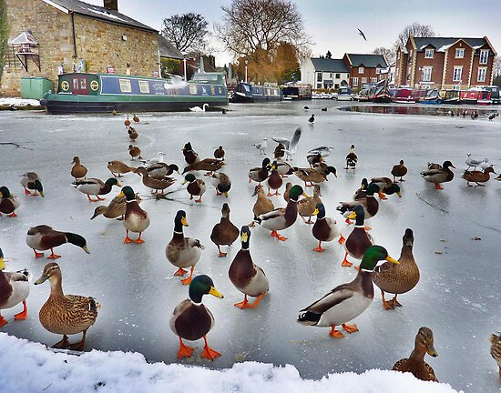 The Frozen Garstang Basin . by Lilian Marshall