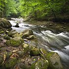 Smokey Mountain Stream 517 by Randall Nyhof