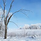 A Winter's Day by lorilee