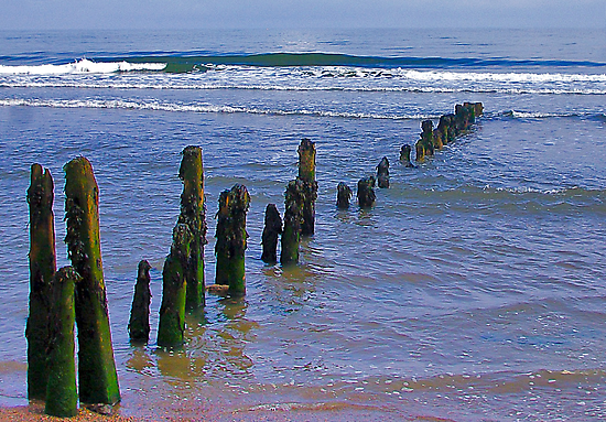 Old Groynes at Sandsend. by Trevor Kersley
