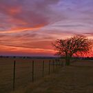 Hill County Sunset by Susan Russell