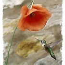 Poppy With a  Hummer by Kenneth Hoffman