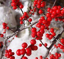 Winterberry (ilex verticillata-Winter Red) by Poete100