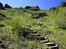 Steps in the Sonoran Desert by Lucinda Walter