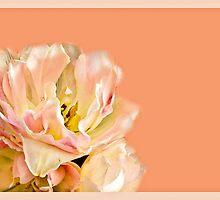 Peaches and Cream Flower Design by Carol F. Austin