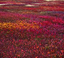 Autumn Field by Charles Plant