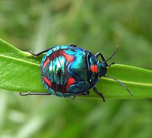 Snazzy Bug by Kath Whitchurch