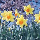 Daffodil Days by Photo-Bob