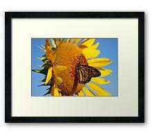 Sitting Pretty on a Sunflower Framed Print