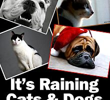 It's Raining Cats & Dogs! by Marcia Rubin