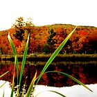 Fall Colors at Bolton Valley by A. Kakuk