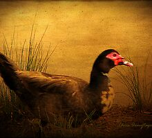 Maurice the Muscovy by Chris Armytage™