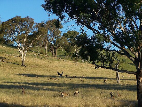 Just before dusk, south of Cook in Canberra.- Australia. by shortshooter-Al