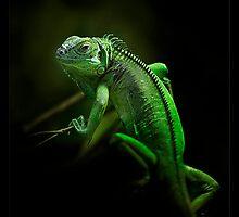 lizard by ArtX