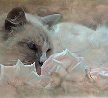 """""""As Gentle as a Kitten ..."""" by Rosehaven"""