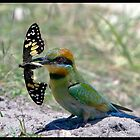 Rainbow Bee-Eater 307  by John Van-Den-Broeke