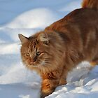 Tommy in the Snow by ApeArt