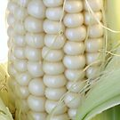 Sweet white corn on the cob by donna rae moratelli