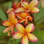 Frangipani flowers No 2 by Annabella