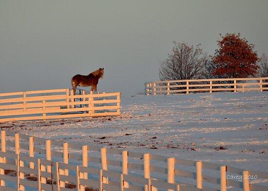 Cold Morning in Kentucky by John Carey