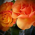 Peach Roses (1 of 2 )... by Rita  H. Ireland