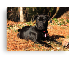 Cinder in the Sun Canvas Print