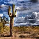 One Tall Cactus by George Lenz