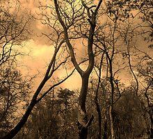 Sanjay Gandhi National Park, Mumbai by rohsun