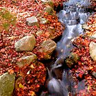 Fall and Flow by GreenShutter