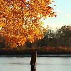 Mid-November stroll along the Rancocas by Nicole Harris