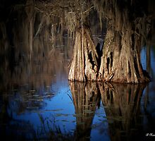 Two Together - Cypress Trees on Caddo Lake by Betty Northcutt
