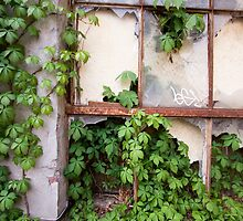 Ivy From a Broken Window by LauraMargaret