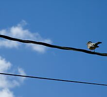 Bird on a Wire by LauraMargaret