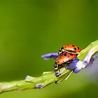 Love Bugs by J. Day