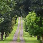 Seeking Green Tranquillity? It's Here On This Pathway by David McMahon