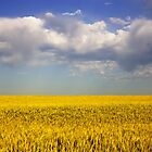 Grain by Chris Pultz