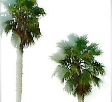 Palms in Wind by deepbluwater