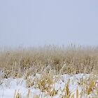 Wetland in Winter by Chris Pultz
