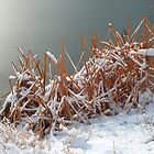 Winter Reeds by bluerabbit