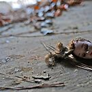 Broken doll head on floor by ashley hutchinson