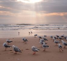 Goodmorning Seaguls by SuzieD