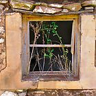 Window of weeds by Ali Brown