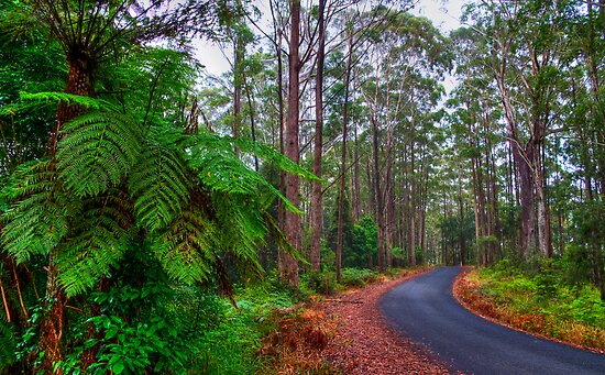 Rainforest - Port Macquarie - Australia by Bryan Freeman