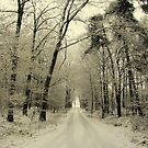 A New Year, The Road Ahead by ienemien