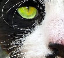 Cat's Eye by paintingsheep