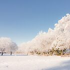 Belhaven Park winterscape by Andrew Littlejohn
