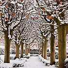 Snowy avenue, Oxford by Zoe Power