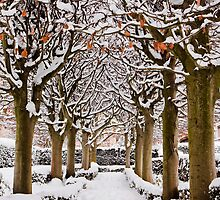 Snowy avenue, Oxford by Zoë Power
