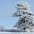 One Frosted Tree by lorilee