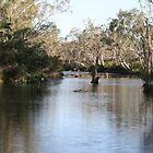Major Creek Reserve, Victoria by aussiebushstick